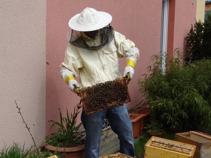 beekeeper-970219_1920