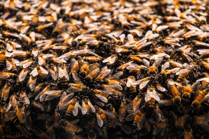 bees-235626_1920