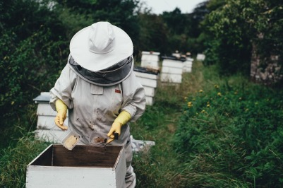 Keeping Bees