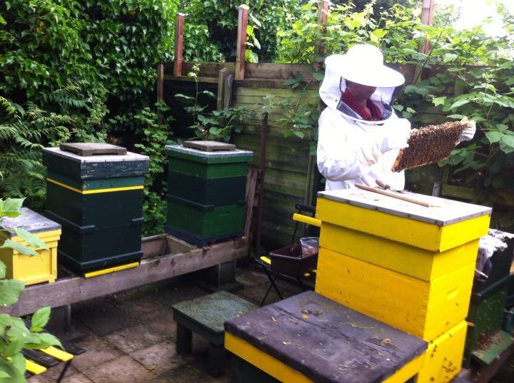 beekeeper-1668546_1920