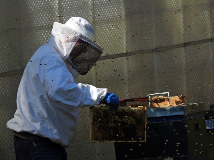 beekeeper-2156660_1920