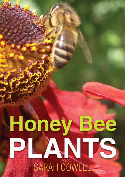 honey bee plants