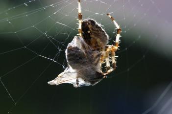 spider-776984_1280