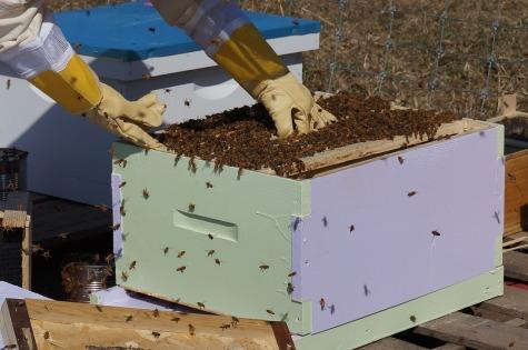 beekeeping-1537156_1280 (1)