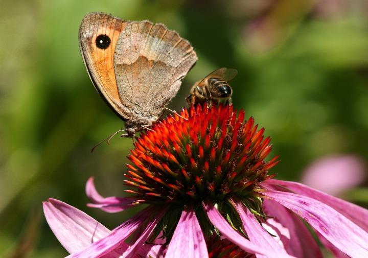 butterfly-1631994_1920.jpg