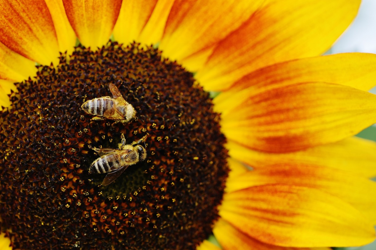 Top 100 Plants You Can Grow To Help Increase Bee Population