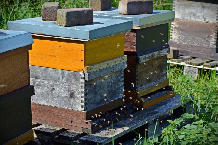 flying debris is biggest threat to beehives during a storm.