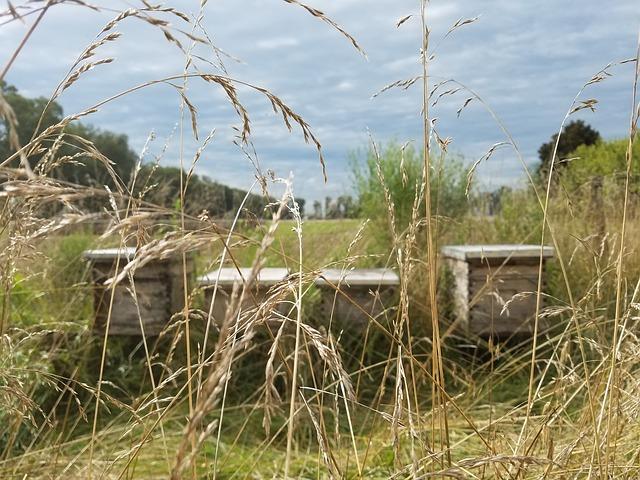 beekeeping-2423310_640